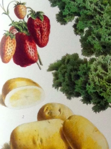 Colloque Cancer, Inégalités, Nutrition