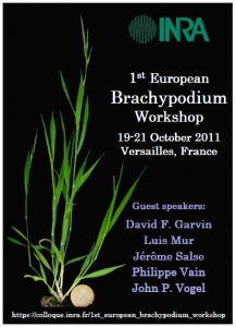 First European Brachypodium Workshop