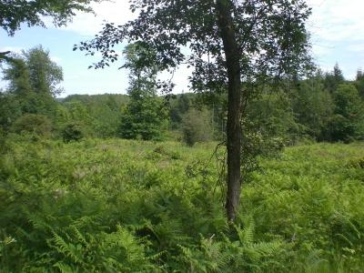 Forêt colloque DIM Astréa