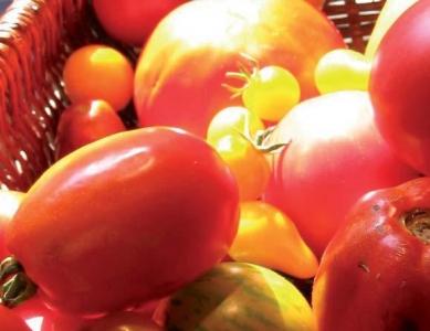 Journées techniques fruits & légumes biologiques 2009