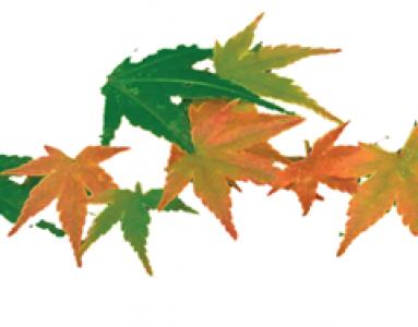 Worshop Leaf Senescence